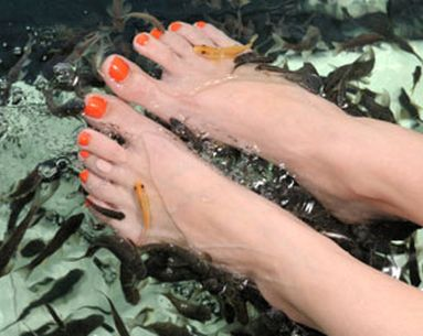 This Pedicure Gets Even More Fishy