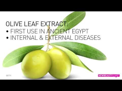 Ingredient Spotlight: Olive Leaf Extract