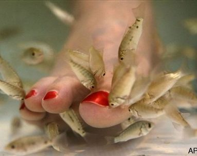Another State Forbids The Fish Pedicure