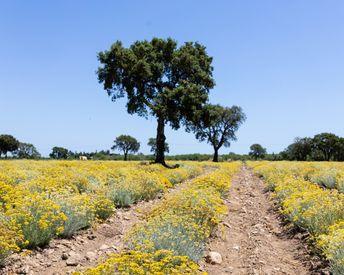 On Location: The L'Occitane Family Farm