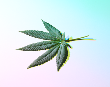 Top CBD Questions, Answered