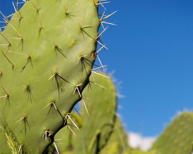 Why You Should Start Drinking Cactus Water