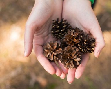 Can Pinecones Prevent Sagging Skin?
